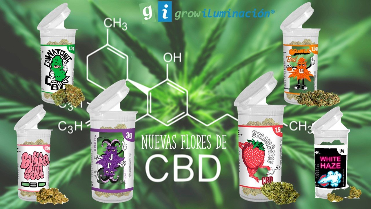 Flores-CBD-GrowIluminacion